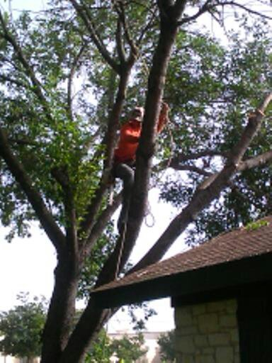 tree trimming removal service